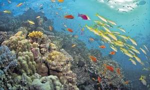 corkboard barrier reef