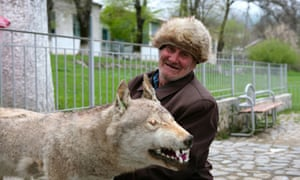 Azeri wolf