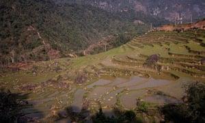 Vietnam hillside