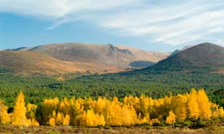 Rothiemurchus Forest and the Cairngorms.