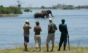 Elephants in the Majete reserve, Malawi