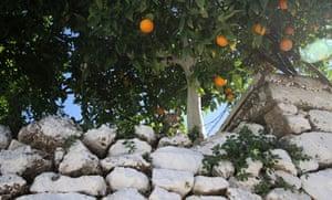 Mani oranges