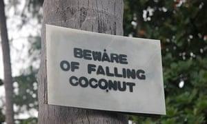 Beware of falling coconut sign
