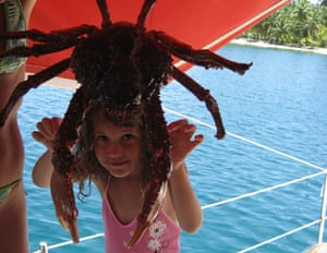 A huge crab in the San Blas islands