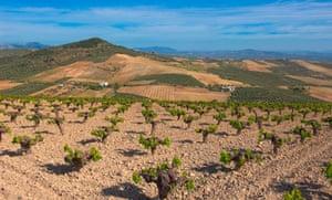 Montilla, vineyards