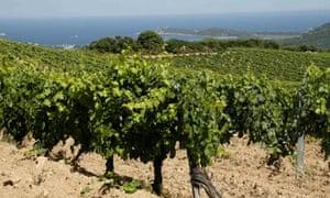 Torraccia vineyards, Corsica