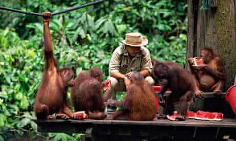 Sepilok orang-utan sanctuary