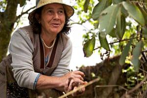 Marmelete walnut picking