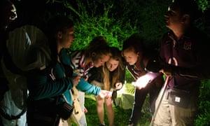 Knepp safari moths