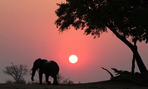 Dawn patrol … Elephants are highly prized by tourists and poachers alike. Photograph: Kevin Rushby