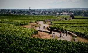 Hungry Cyclist, Burgundy