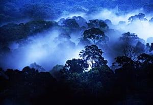 Mattias Klum gallery: Rainforest in Danum Valley, Malaysian Borneo