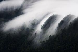 Mattias Klum gallery: Mist-drenched forest in the Santubong area, Sarawak, Borneo