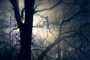 Mattias Klum gallery: Oak on a November morning, Uppsala, Sweden