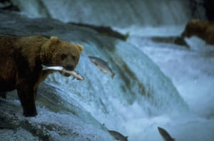 US National Parks: Katmai National Park, Alaska, USA