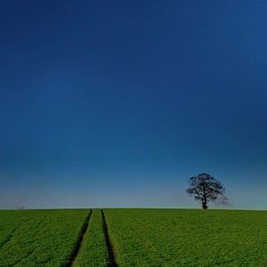 been there march: Tree in a field, Essex