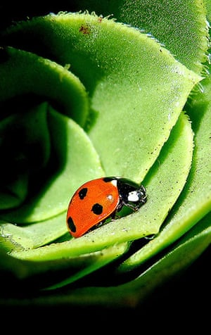 Been there: green: Green: ladybird living in the green