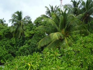 Been there: green: Green: Fihalhohi, the Maldives