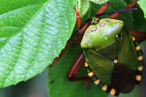Been there: green: Green: bug in northern Laos