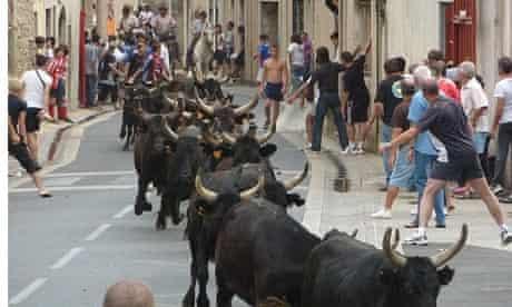 Bull ruuning, Languedoc
