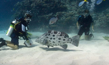Underwater on the Great Barrier Reef