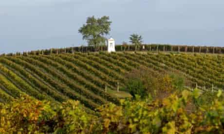vineyard Southern Moravia Czech Republic