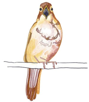 spotters guide birds: Nightingale