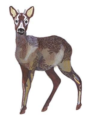 spotters guide deer: Roe deer