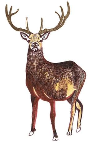 spotters guide deer: Red deer
