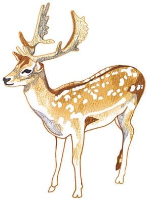 spotters guide deer: Fallow deer