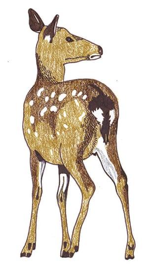 spotters guide deer: Sika