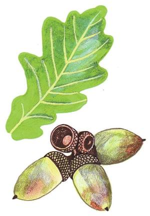 Spotters guide broad leaf: Oak