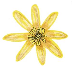 Spotters guide flowers: Lesser celandine