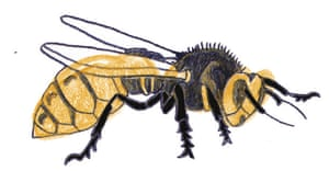 Spotters guide bugs: Hornet