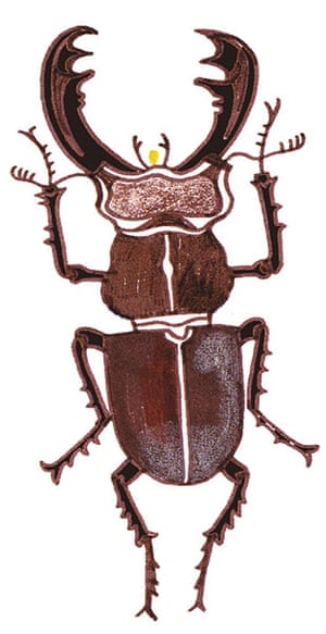 Spotters guide bugs: Stag beetle