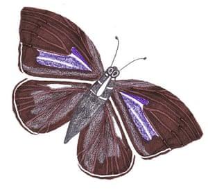 Spotters guide butterfly: Purple hairstreak