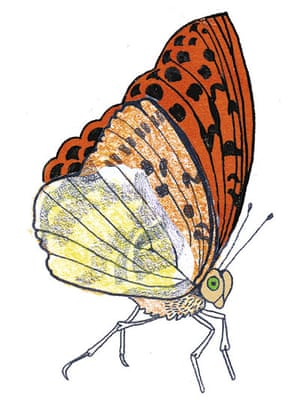 Spotters guide butterfly: Silver-washed fritillary