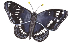 Spotters guide butterfly: White admiral