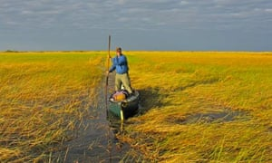 Phil Harwood poling his way through the vast Bangweulu swamp, Congo