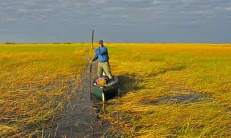 Phil Harwood poling his way through the vast Bangweulu swamp, Congo