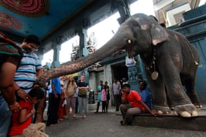 Elephant blessings at a Hindu Temple, Pondicherry, India