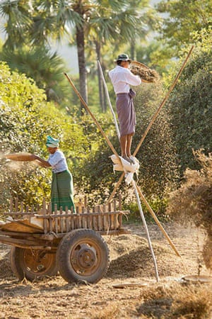 TPOYA: Groundnut harvest near Bagan, Burma