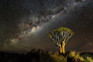 TPOYA: Quiver tree, Namib desert, Namibia