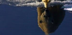 TPOYA: Polar bear, Svalbard, Norwegian Arctic