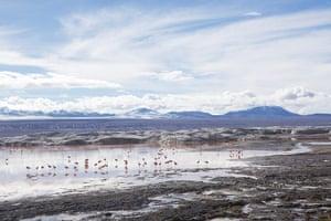 Bolivia: Flamingo lake, Bolivia