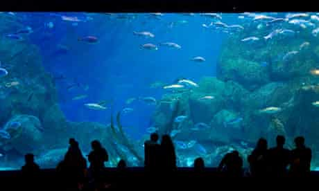 National Marine Aquarium in Plymouth