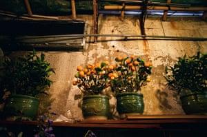 Hong Kong photoblogger: Tangerine tree