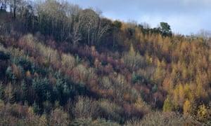 Autumn coloured trees on hillside near Abercych, Pembrokeshire, Wales, United Kingdom