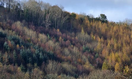 Autumn coloured trees on hillside near Abercych, Pembrokeshire, Wales, United Kingdom