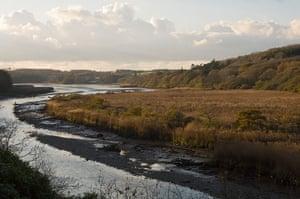 Wales wildlife: Minwear, Pembrokeshire, WalesMinwear, Pembrokeshire, Wales